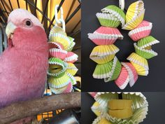 Foraging parrot toy made with cupcakes liners