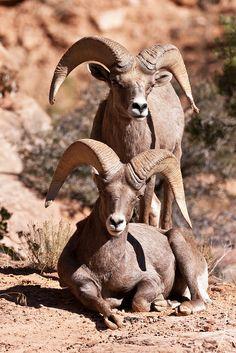 Double Trouble, Zion National Park