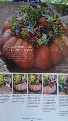 Creative and beautiful succulent and pumpkin Fall decoration from Country Gardens August 2014 issue complete with step by step instructions. Bravo!