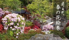 Primavera galeria de rolagem imagem da flor Foto | jardim japonês | primavera quente pousada Kaneyamaen com vista para a pousada Fuji perto do lago Kawaguchi na província de Yamanashi