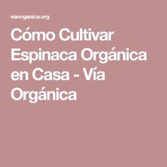 Cómo Cultivar Espinaca Orgánica en Casa - Vía Orgánica