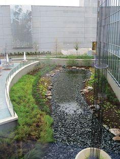rain garden - Google Search