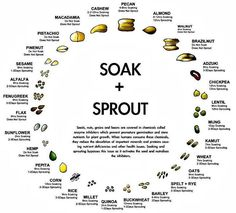 "Sprouting chart: From Raw Food Rehab If you are curious how to sprout. It brings your food into a ""living"" state."