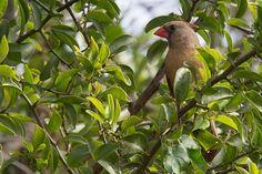 Female Cardinal.  See more pics from the Yamato Scrub at https://flic.kr/s/aHsjYLZPg5   Like it? Tip it!  http://smalagodi.tip.me -  http://onename.io/malagodi