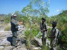 Park ranger Jenny Hunter and traditional owners Stephan Anderson and Jake Baird collecting Hibiscus brennanii | http://blog.parksaustralia.gov.au/2014/07/23/plant-collecting-in-kakadu/