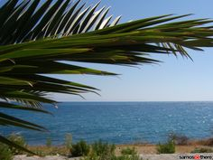 Always NEW photos of Samos, photo of Samos foto, up to date pictures of Samos, samos-online pictures. I try to keep you up to date with a foto gallery of samos, what's happening on Samos events. Green Colors, Colours, Online Photo Gallery, Samos, Greece, Plant Leaves, Photo Galleries, Island, Beach