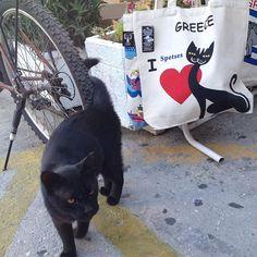 Cats of Spetses Bat Signal, Superhero Logos, Cats, Instagram, Gatos, Cat, Kitty, Kitty Cats