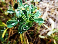 Alice Springs, Australia 2011 by Ashley J. Palmer, via Flickr Alice Springs, Australia, Plants, Plant, Planets