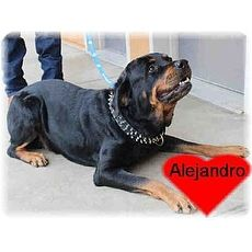 Gus Alejandro | Friends of Canines Animal Rescue | Tracy, California | Pets.Overstock.com