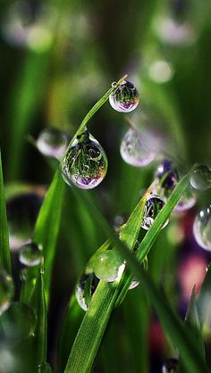 Water Drop Photography, Rain Photography, Amazing Photography, Dew Drops, Rain Drops, Flower Wallpaper, Nature Wallpaper, Photographie Macro Nature, Bubble Pictures