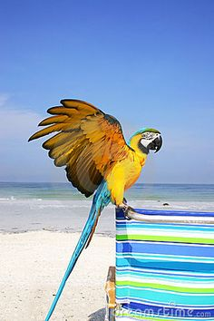 my next goal is to own a macaw. cant wait!