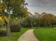 Parc de Champagne à Savigny-sur-Orge - Buissons au bord du chemin