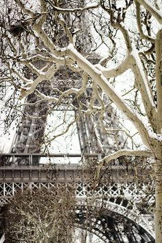 I just thought this picture was beautiful. Maybe going to Paris in the winter wouldn't be such a bad idea.