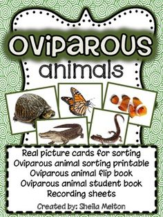 I love using real pictures in science...and so do my students! This includes 24 animal picture cards - 12 oviparous animals and 12 non oviparous animals. All pictures come with and without animal name labels. These cards are PERFECT for your Science Center! I've included sorting cards to sort the animals under, recording sheets and several printable activities that are ready to print and go!