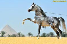 Sameh Alshrouq - by Alaiad Stud
