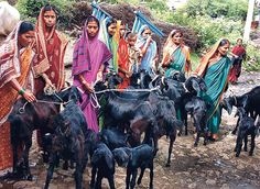 women and goats in india