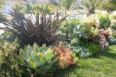 succulent garden, leaf & clay