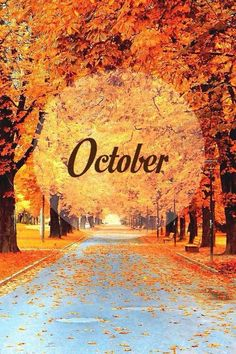 Love the fall October Wallpaper, Cute Fall Wallpaper, October Images, October Pictures, October Country, October Fall, Happy October, Autumn Scenes, Autumn Aesthetic