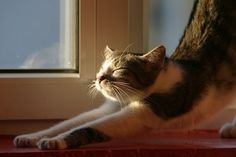 Cat stretching picture : excellent for human too