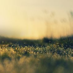 macro grass
