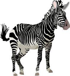 Free vector graphic: Zebra, Africa, Animal, Safari, Zoo - Free Image on Pixabay - 152604