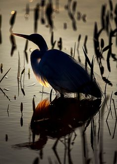 Backlit Egret (abstract) | Flickr - Photo Sharing!