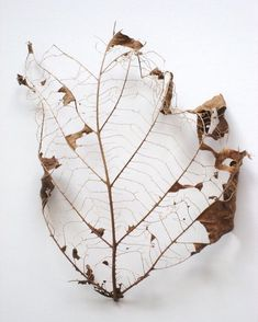 Best Photo Guide - Nature Photography Tips And Tricks That Really Work Decay Art, Leaf Skeleton, Nature Photography Tips, Ocean Photography, Wedding Photography, Photography Classes, Growth And Decay, E Mc2, Dry Leaf