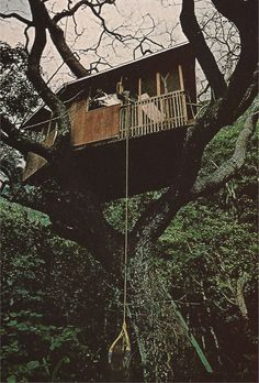 """Living off the land means building in the treetops for one Waipio Valley resident."" (National Geographic, 1975)"