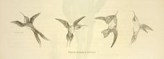 Pájaros moscas y colibríes   banrepcultural.org