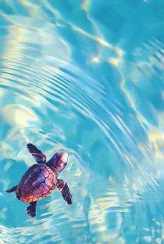 Travel Discover cute baby animals cute baby turtles animals and pets funny Baby Sea Turtles Cute Turtles Turtle Baby Save The Sea Turtles Pet Turtle Tiny Turtle Cute Little Animals Cute Funny Animals Adorable Baby Animals Baby Sea Turtles, Cute Turtles, Turtle Baby, Save The Sea Turtles, Pet Turtle, Tiny Turtle, Cute Little Animals, Cute Funny Animals, Adorable Baby Animals