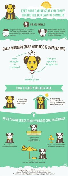 Protect Your Dog in The Dog Days of Summer…