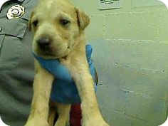 Act quickly to adopt LONNIE. Pets at this shelter may be held for only a short time.