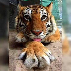 A photographic Big Kitty!! Found on Facebook.