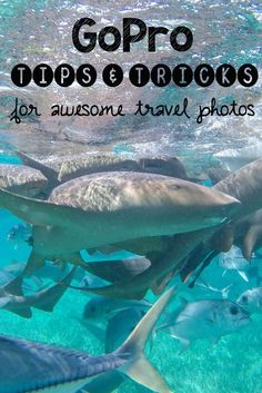 Here are my favorite Go Pro Tips and Tricks to help you improve your travel photography and document your adventures