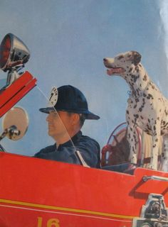 dalmatian fireman