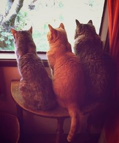 bird patrol, if only all three of our cats got along to do this!!!