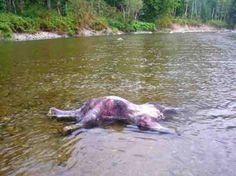 Encuentran el Cuerpo de un Hombre Lobo en un Rio – Misterios Resueltos y Sin Resolver
