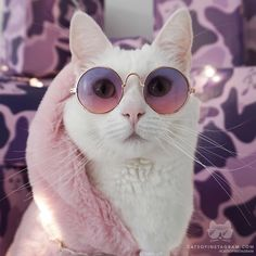 I love the colors that match the glasses and scarf of this lovely white cat. I love the colors that match the glasses and scarf of this lovely white cat. Pretty Cats, Beautiful Cats, Cute Kittens, Cats And Kittens, Costume Chat, Funny Animals, Cute Animals, Funny Cats, Animals Images