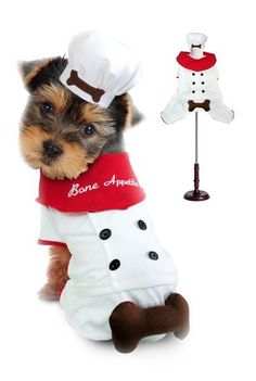 Collar Planet - Bone Appetite Chef Dog Costume, $33.99 (http://www.collarplanetonline.com/costumes/bone-appetite-chef-dog-costume/) It is a gorgeous two piece costume with a white four legged uniform that has a red trim on the legs. There is a lot of attention to detail with a six button design and a 3 D bone attached to it.