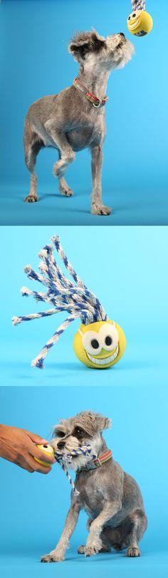 Vesper loves playing fetch with her Chuck-it Fan Tennis Ball!