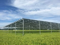 Solar sharing for the future generation — the story of Iitate Electric Power in Fukushima   by The Beam   TheBeamMagazine   Medium Renewable Energy, Solar Energy, Farm Layout, Nuclear Disasters, Agricultural Land, Land Use, Solar Projects, Best Solar Panels, Fukushima
