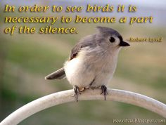 Bird Quote of the Day!  Wild About Birds Nature Center in Layton, Utah sells everything to do with your #BackyardBirds and also offer tours on the Deseret Ranch, which is home to over 100 species of #birds!  For more information, go to http://wildaboutbirdsnaturecenter.com or call 801-779-BIRD.