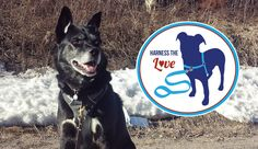 Harness the Love - Tips for On-Leash Walking | I love your dog