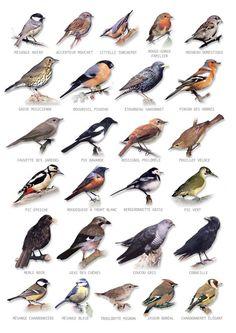 Vente Carte Postale oiseaux - Achat Nature:
