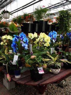 Centre jardin | LeVert Paysage | Laurentides | Mont-Tremblant | Orchidées | garden center