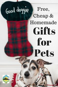 handmade gifts for pets with recycled glass jars caring for family