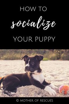 How to Socialize Your Puppy socialization | puppy | shelter dogs | adopted dogs | dog training | dog mom | guest post #DogsTraining