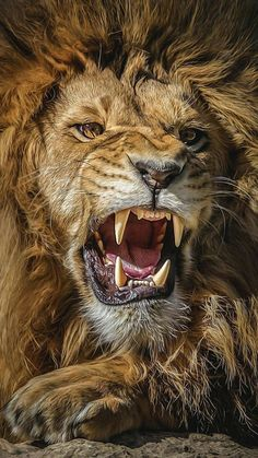 Tattoos Discover Lion rugissant leo lion lion art animals and pets big cat tattoo Lion Wallpaper Animal Wallpaper Lion Pictures Animal Pictures Pictures Images Majestic Animals Animals Beautiful Beautiful Lion Simply Beautiful Lion Images, Lion Pictures, Animal Pictures, Images Of Lions, Pictures Images, Tiger Images, Animals Images, Tier Wallpaper, Animal Wallpaper