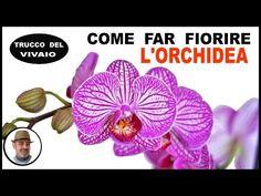 COME FAR FIORIRE L'ORCHIDEA con un semplice trucco - YouTube Make It Yourself, Croissant, Terrazzo, Youtube, Plants, Gardening, Crescent Roll, Garten, Planters