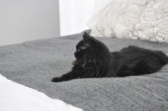 grey white black